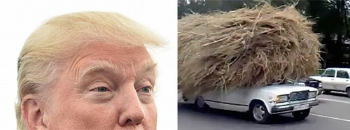 donald-trump-looks-like-tumbleweed