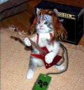 4e0b10c6c41b1291b05c6122e33a0931--rock-n-roll-funny-cats